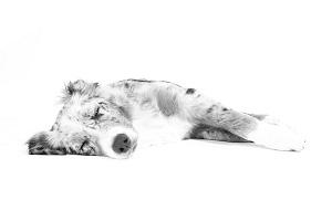 dog-528247_640