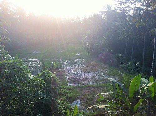 Bali Natur genießen Fülle 3_opt