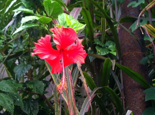 Bali Natur genießen Fülle 5_opt