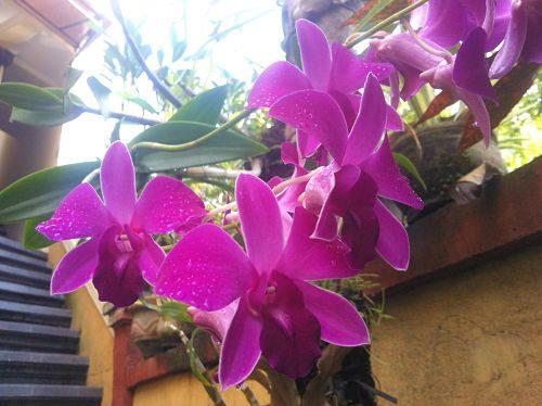 Bali Natur genießen Füllen 8_opt