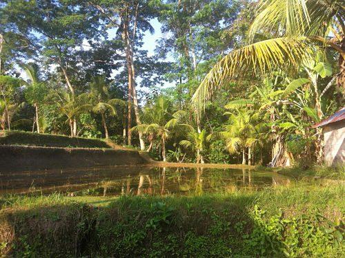 Bali Natur genießen FÜlle 4_opt