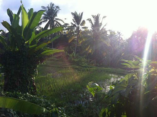 Bali Natur genießen Fülle 7_opt