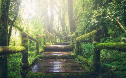 rythmia ayahuasca erfahrungsbericht